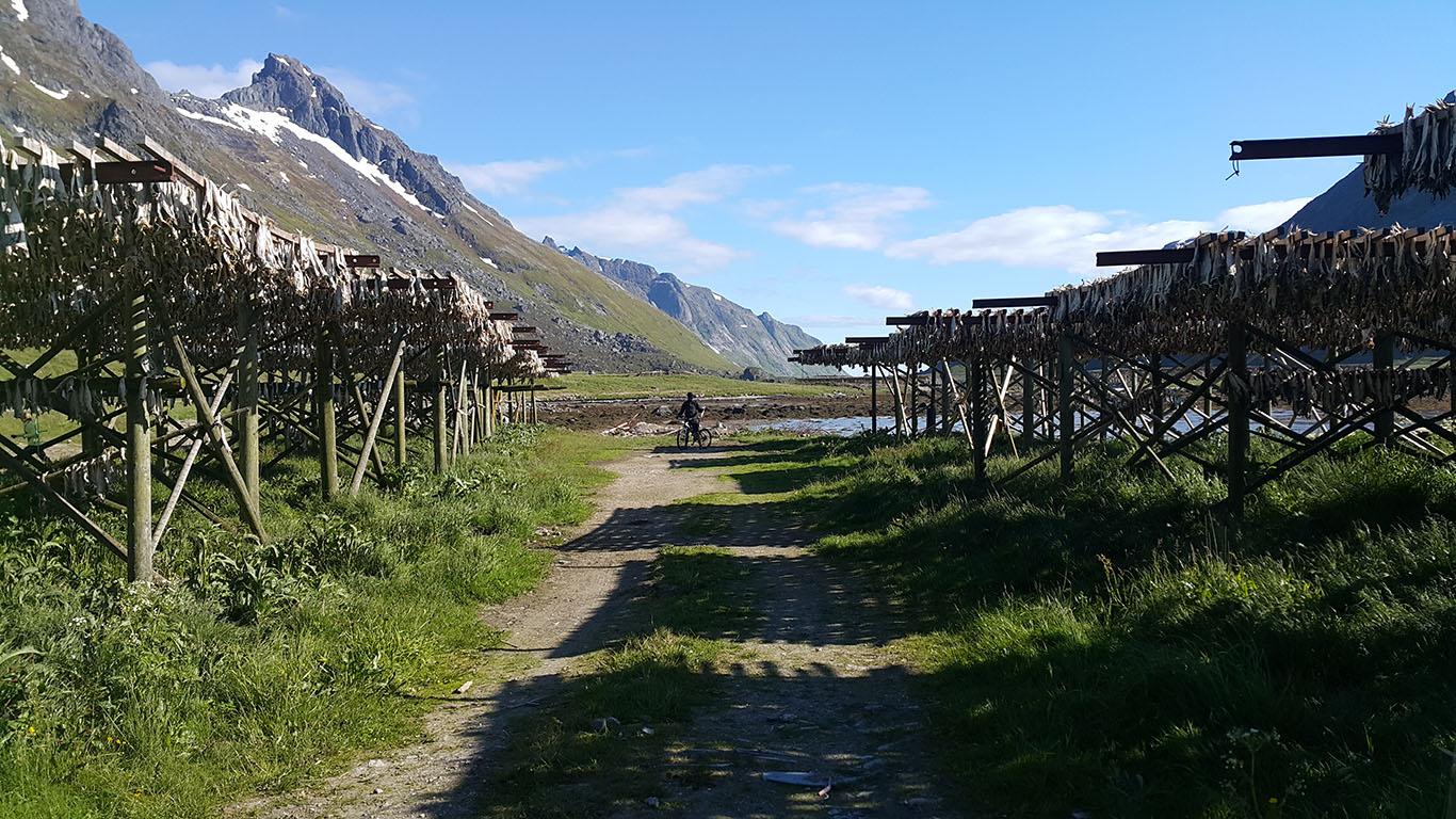 Suszone dorsze1, Norwegia