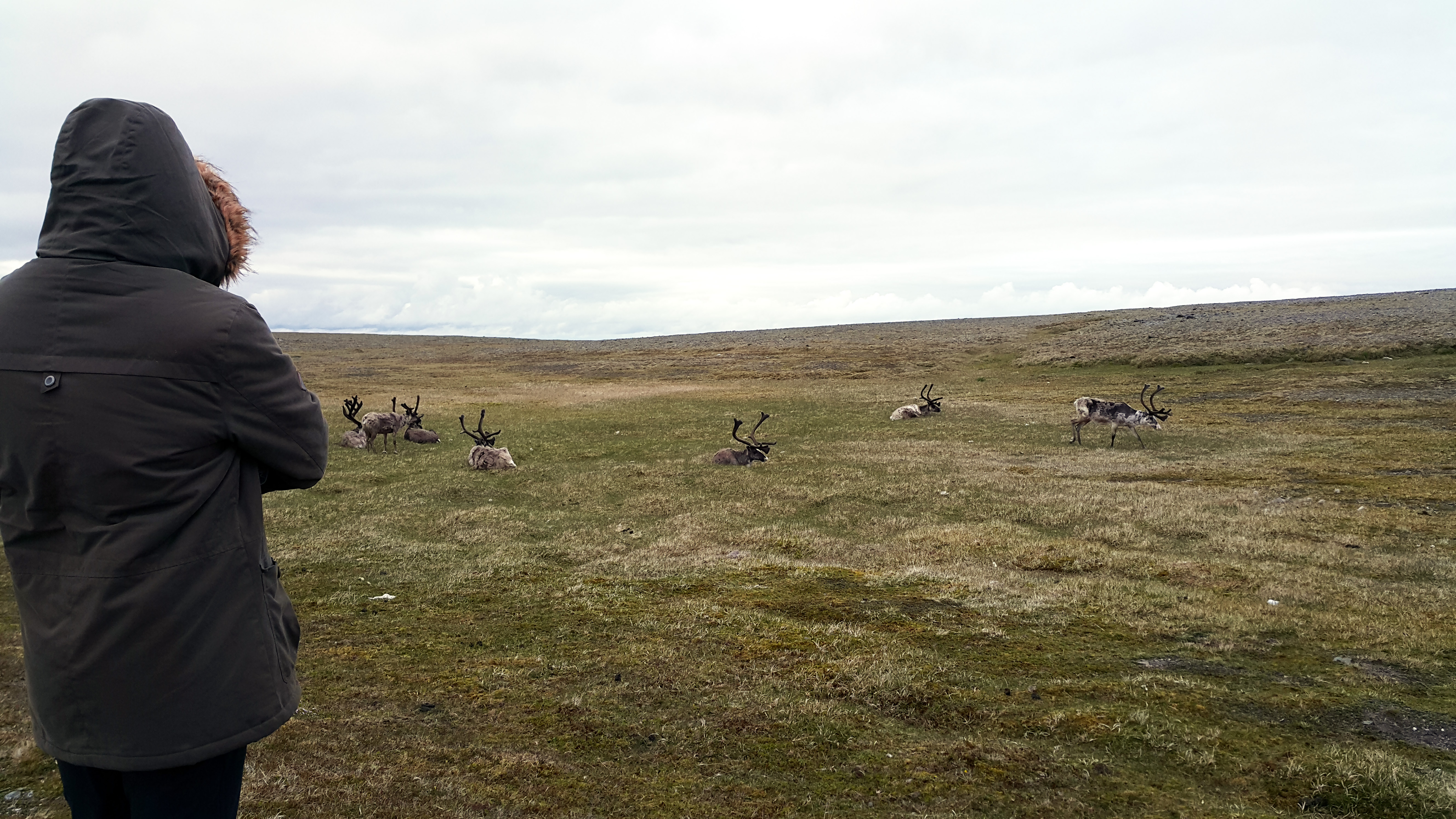 renifery Nordkapp 4
